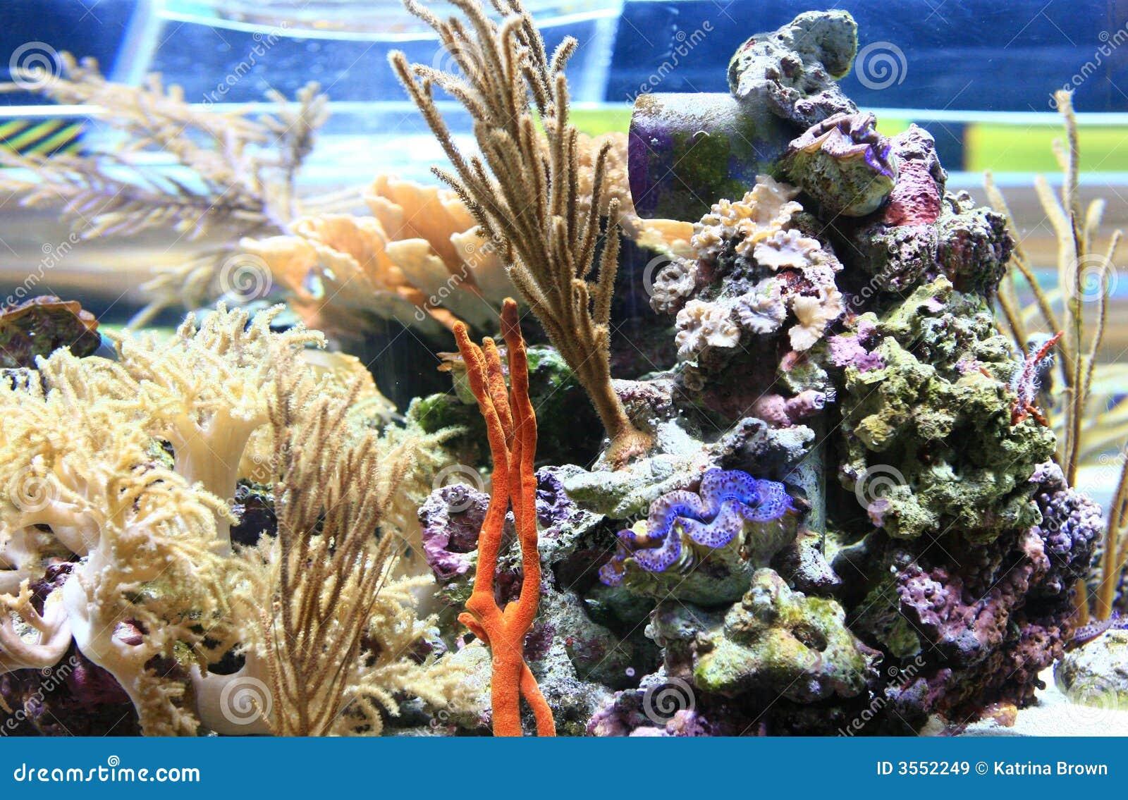 Immagine subacquea