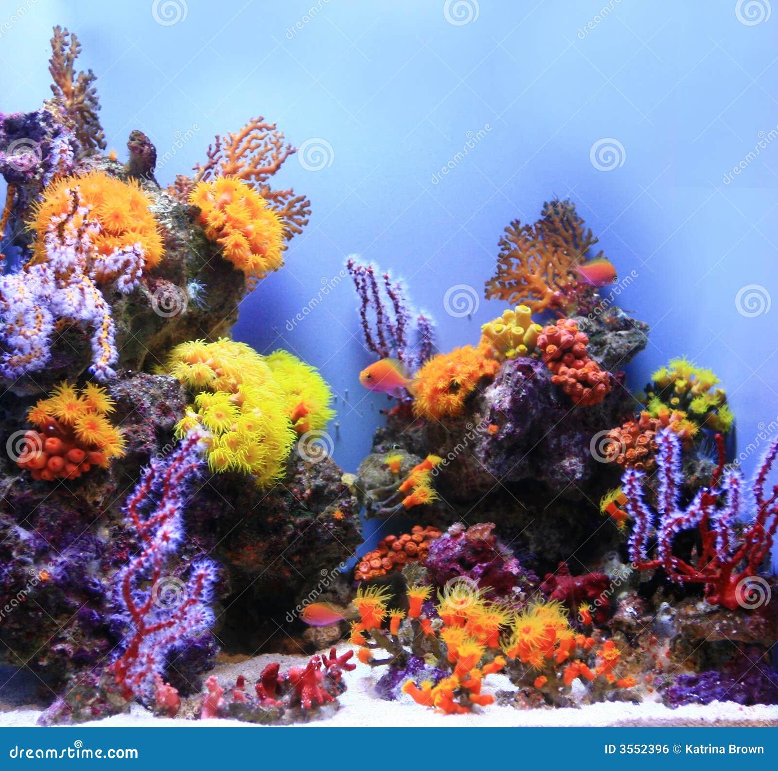Immagine subacquea dell acquario