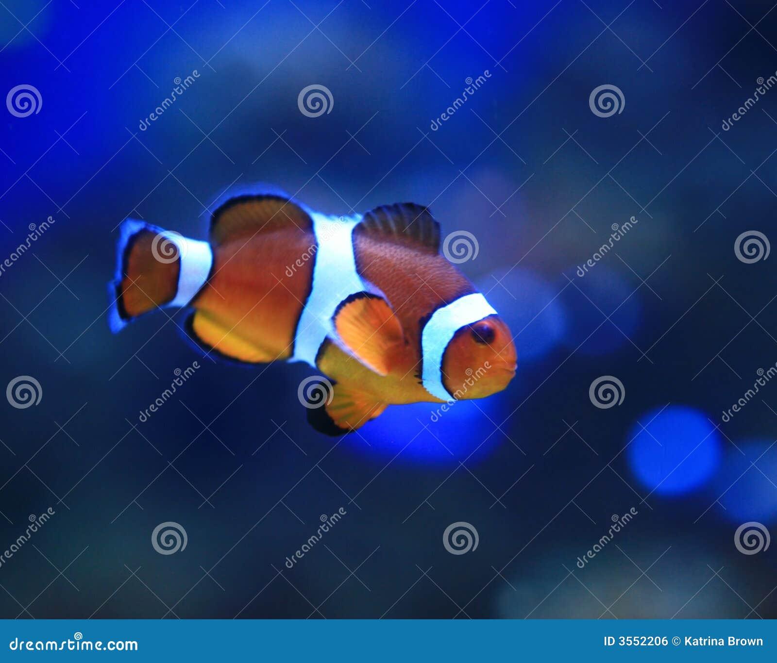 Immagine subacquea di bello