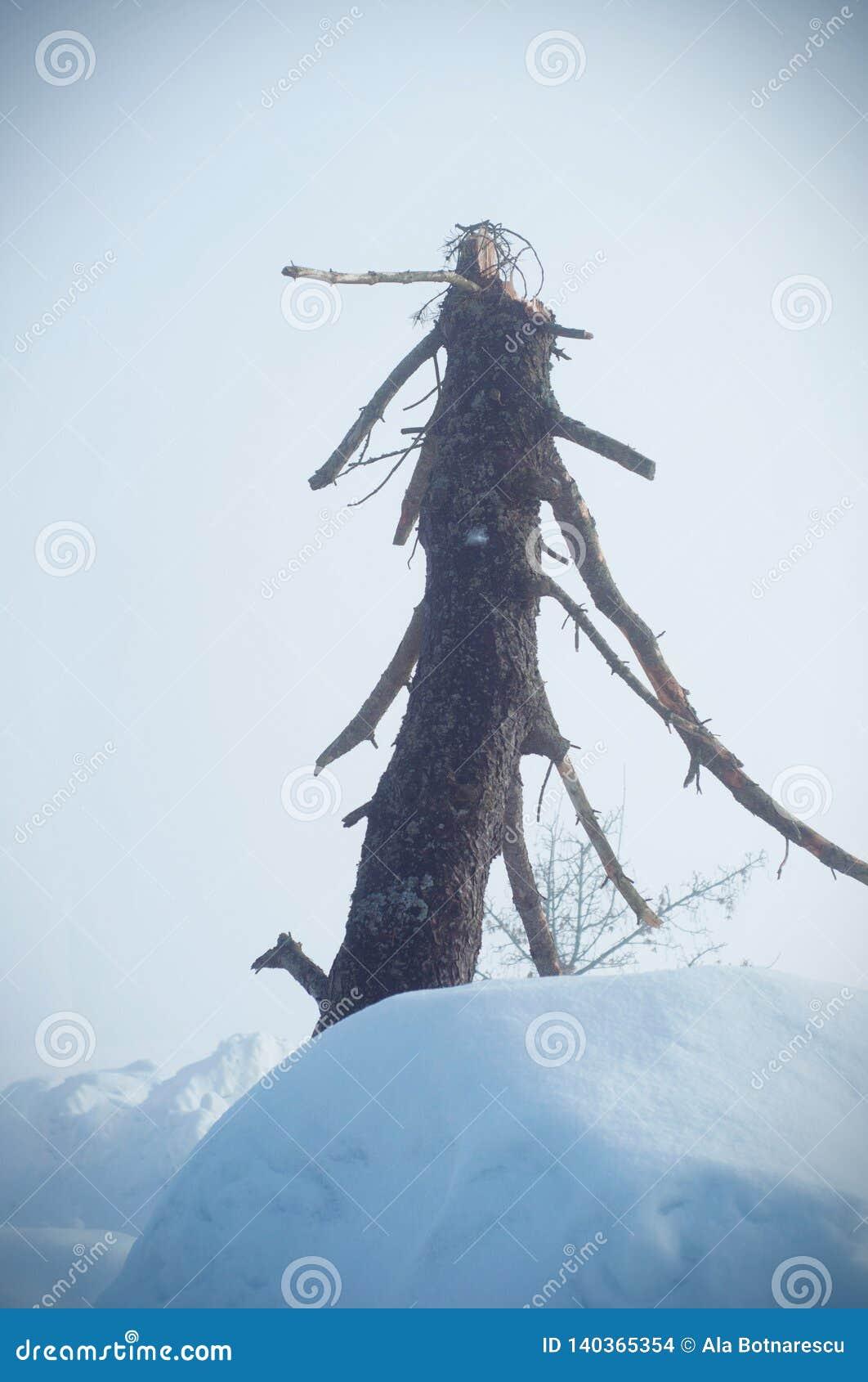 Immagine verticale messa a fuoco su una connessione morta del faggio un Dy nebbioso
