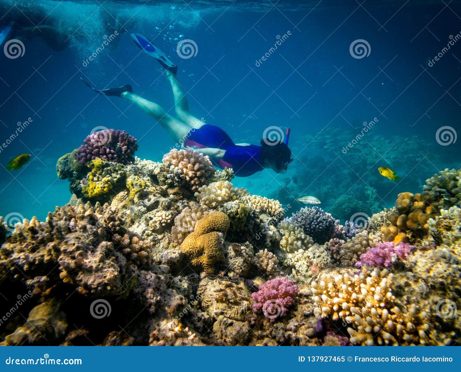 Immergendosi in Marsa Alam, l Egitto Barriera corallina e Lion Fish