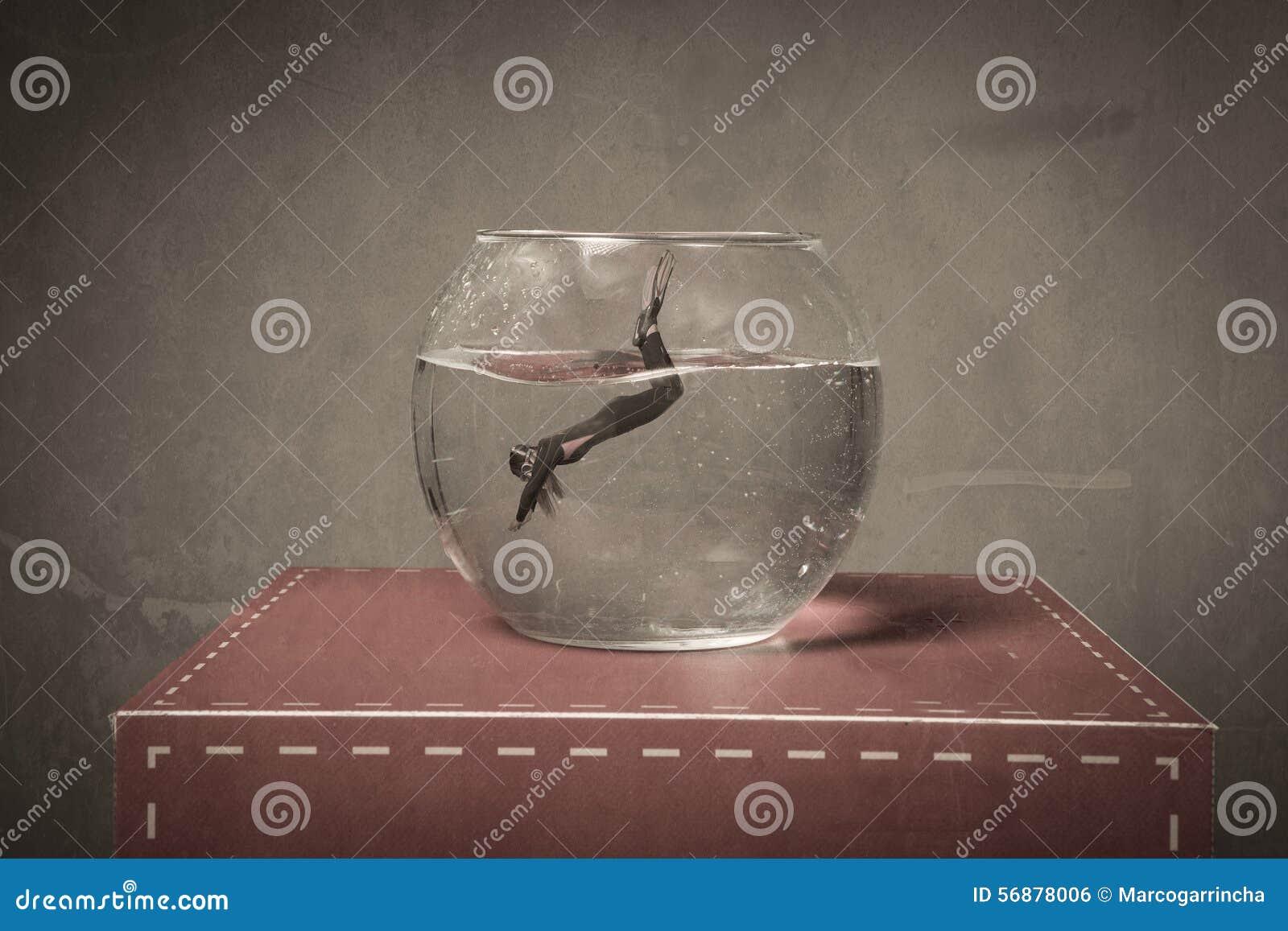 Immersion dans une cuvette de poissons