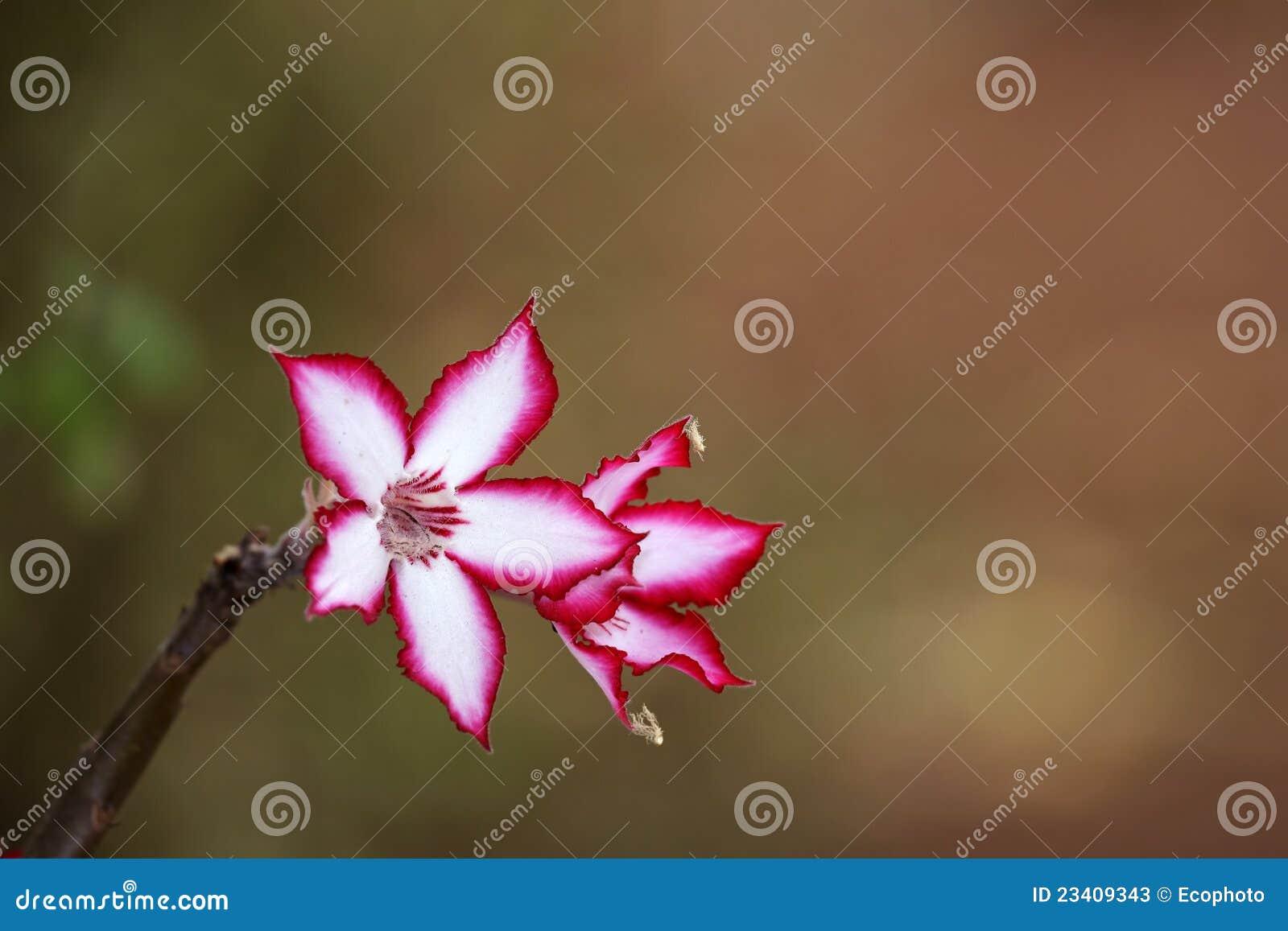 Lily Flower Plant Cartoon Vector Cartoondealer Com 66113561