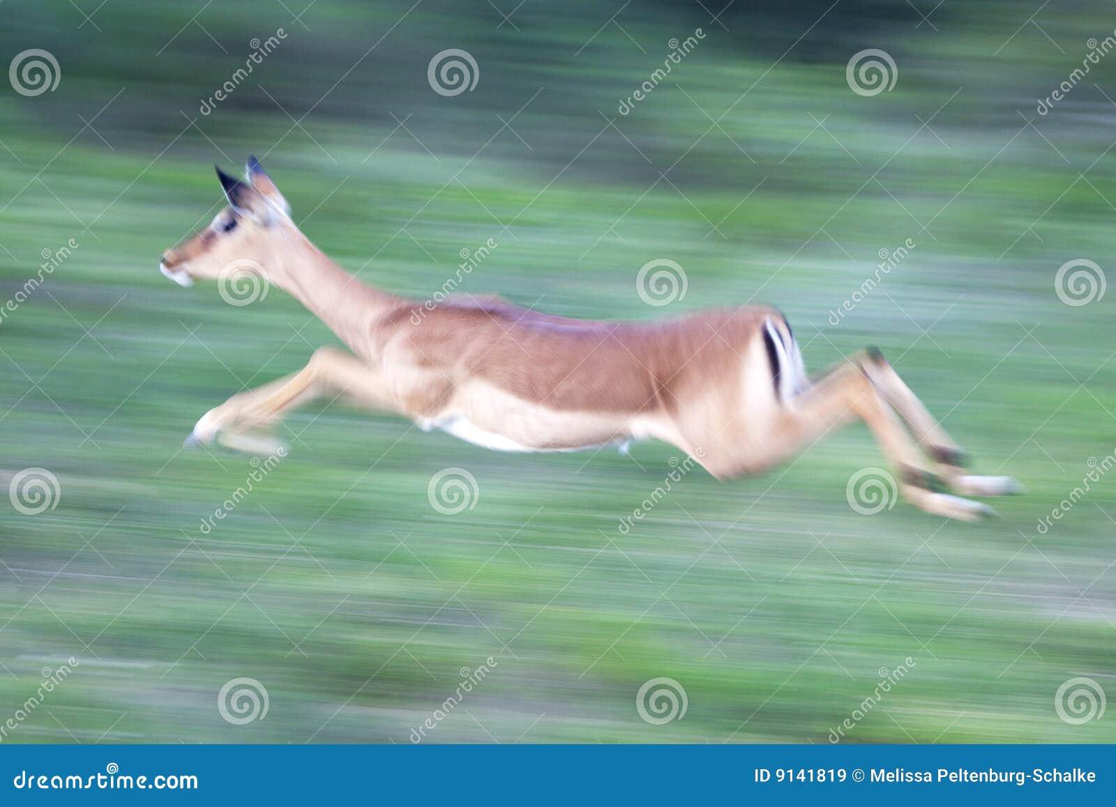 Impalarunning