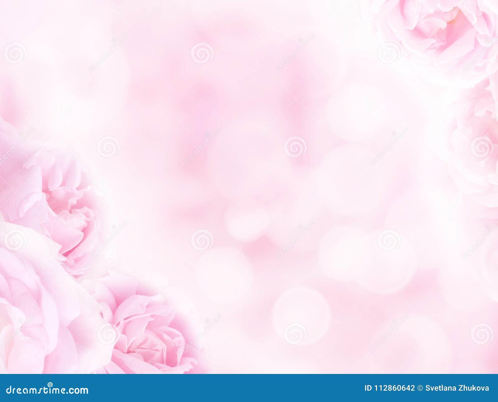 Impallidisca le rose rosa negli angoli dei precedenti vaghi