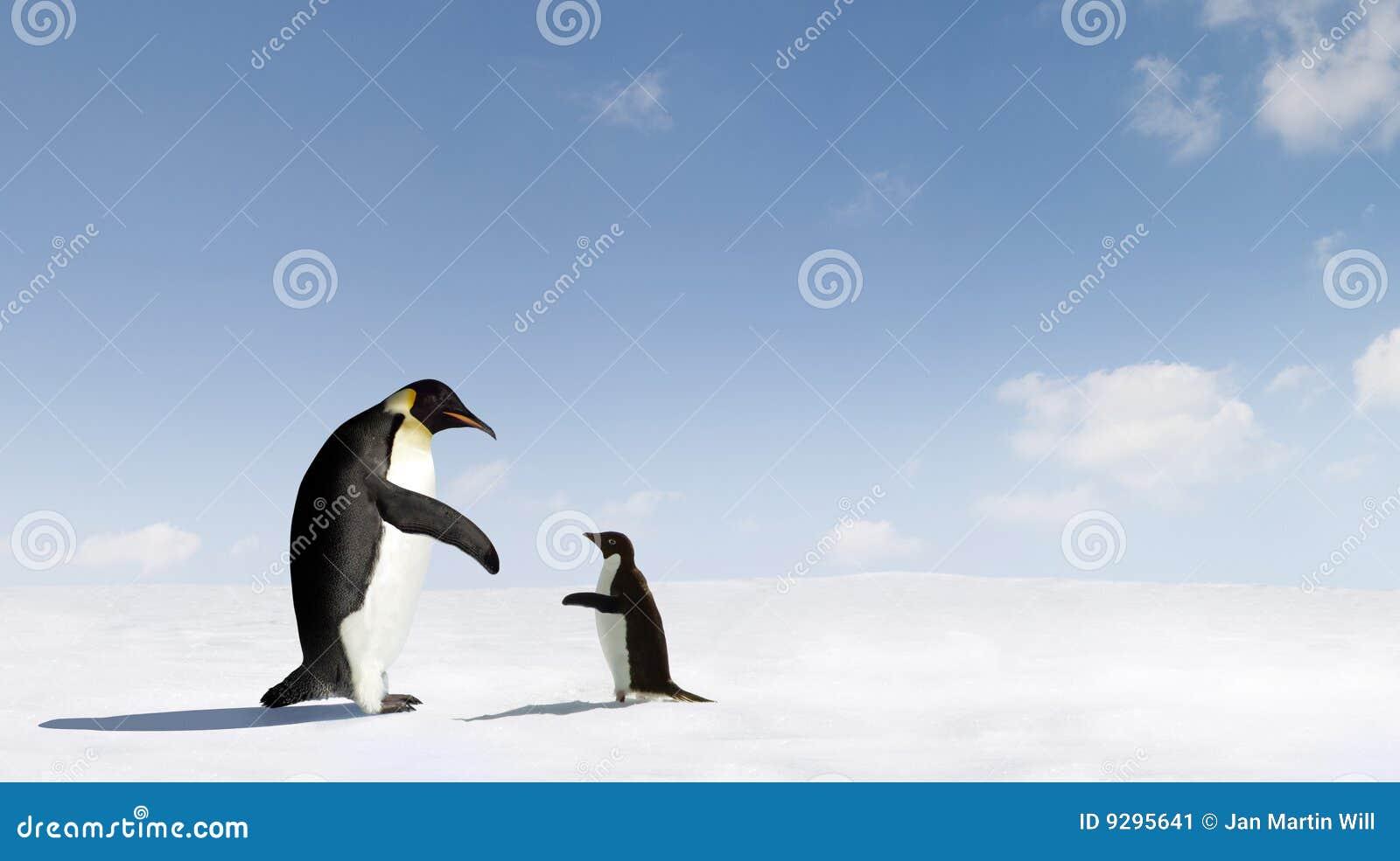 Imperador e pinguins de Adelie