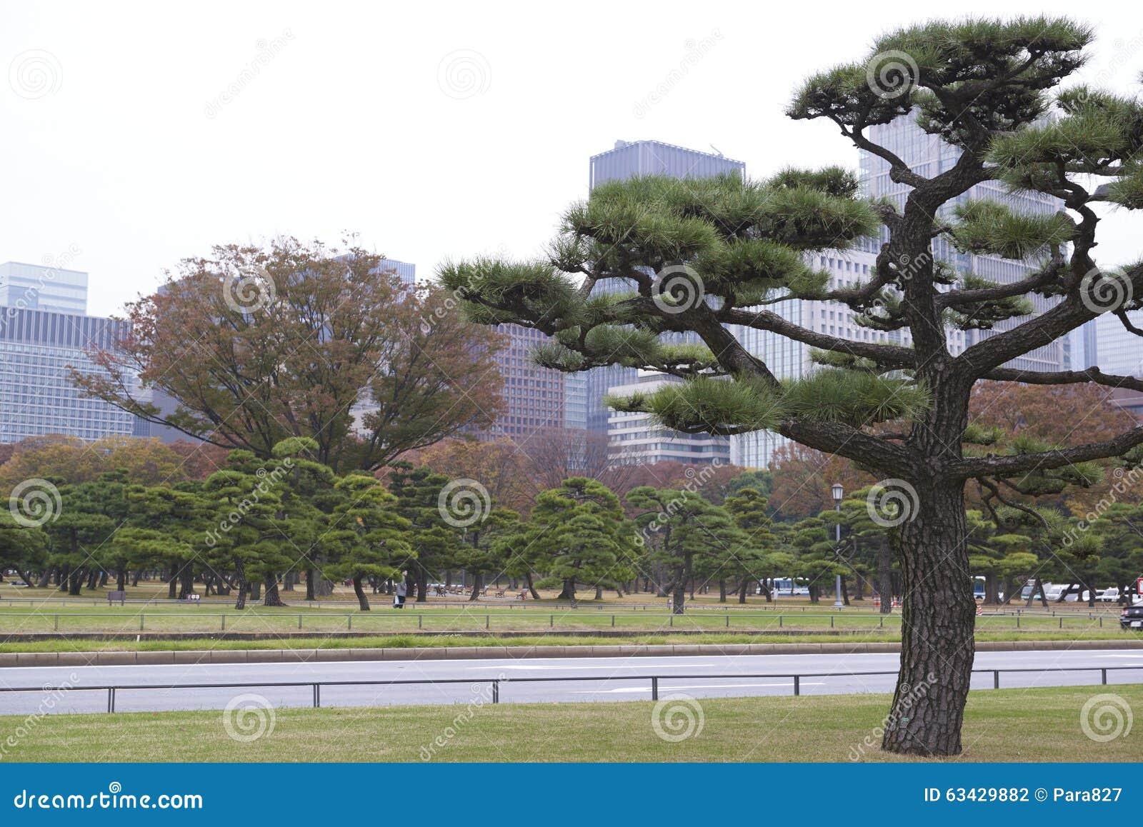 Imperial palace outer garden stock photo image 63429882 for Outer garden