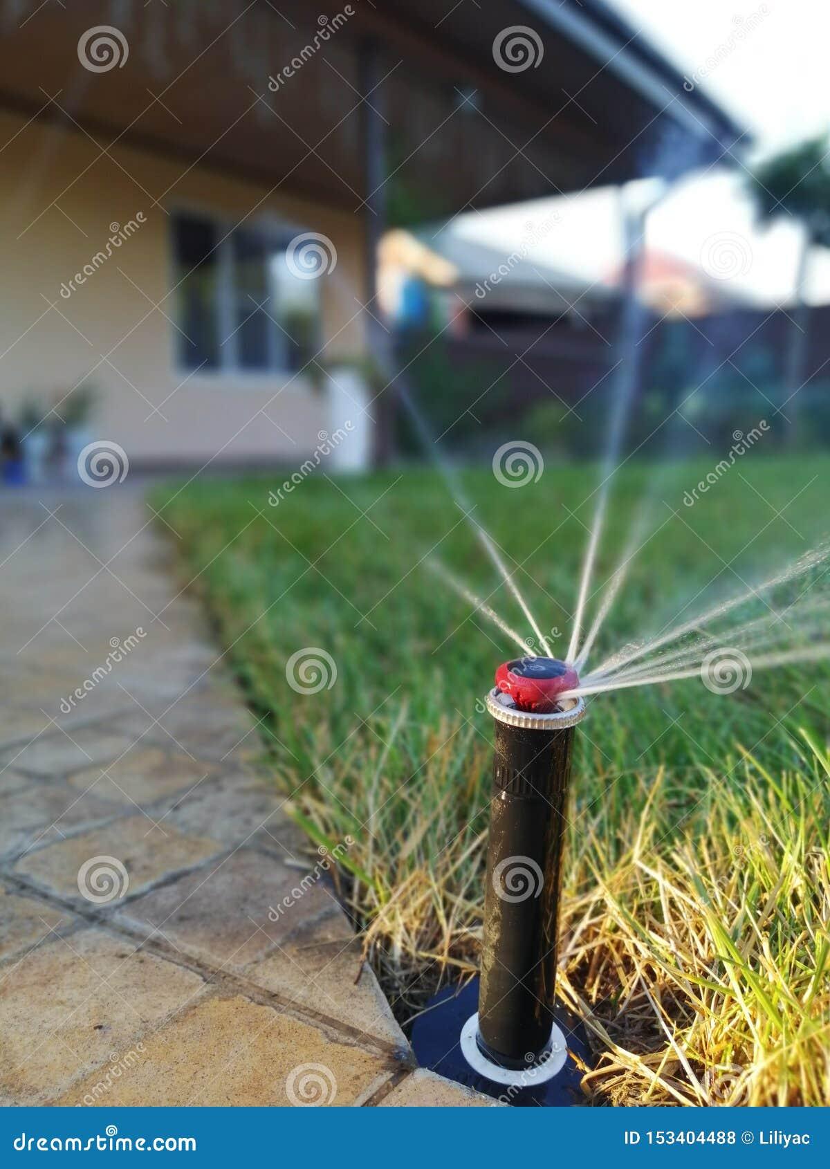 Impianto di irrigazione automatico per il giardino vicino al marciapiede
