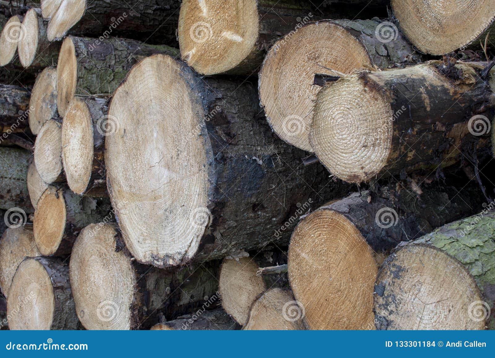 Impili di legno dolce di recente segato registra attendere la raccolta