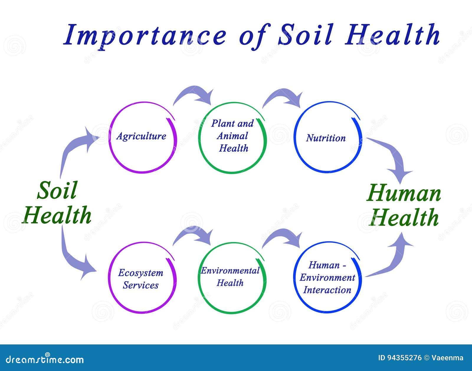 Importance Of Soil Health Stock Illustration  Illustration