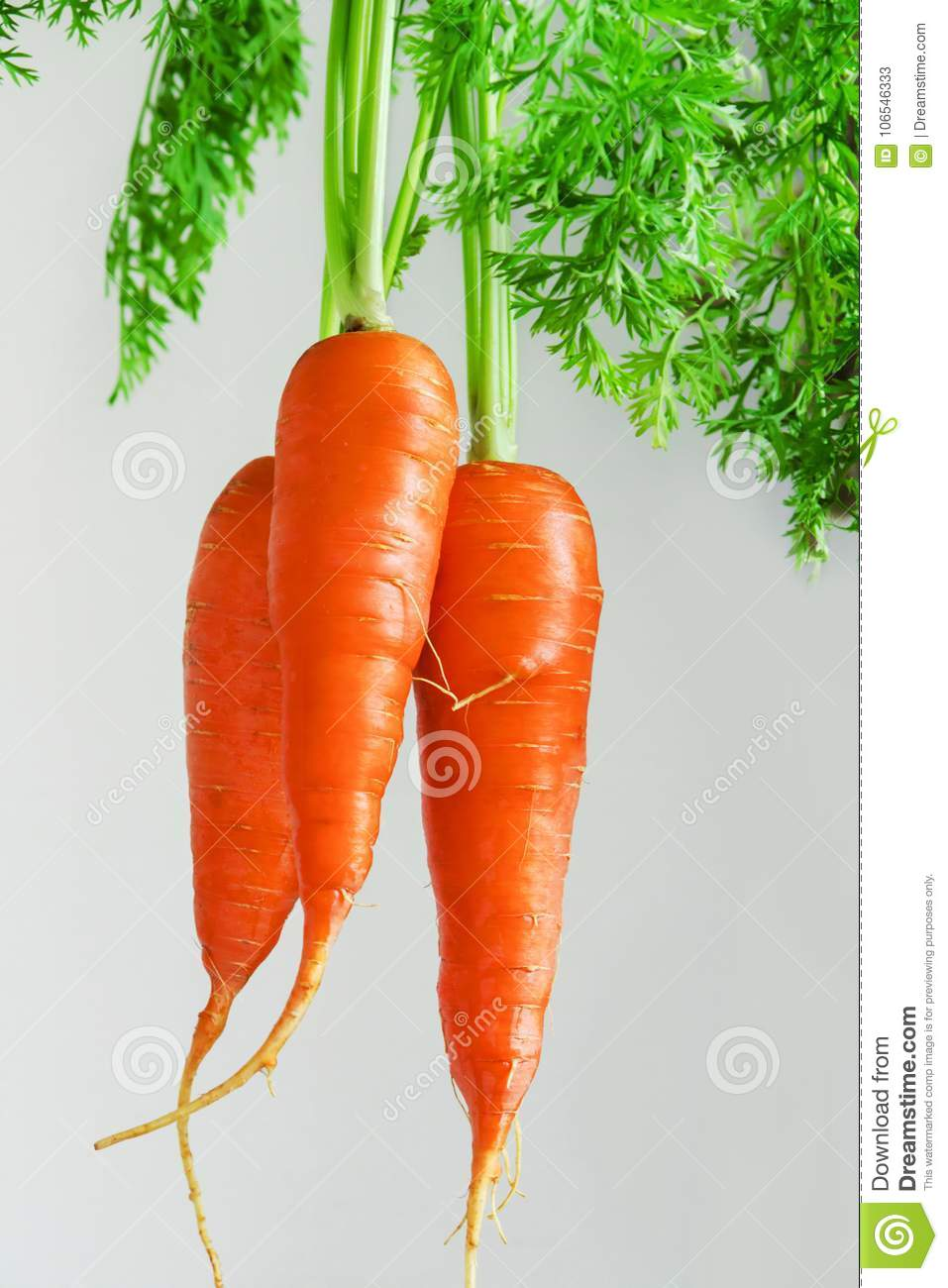 Important human food, carrot root vegetables, rich in carotene, vegetarian nutrition and health ingredients,