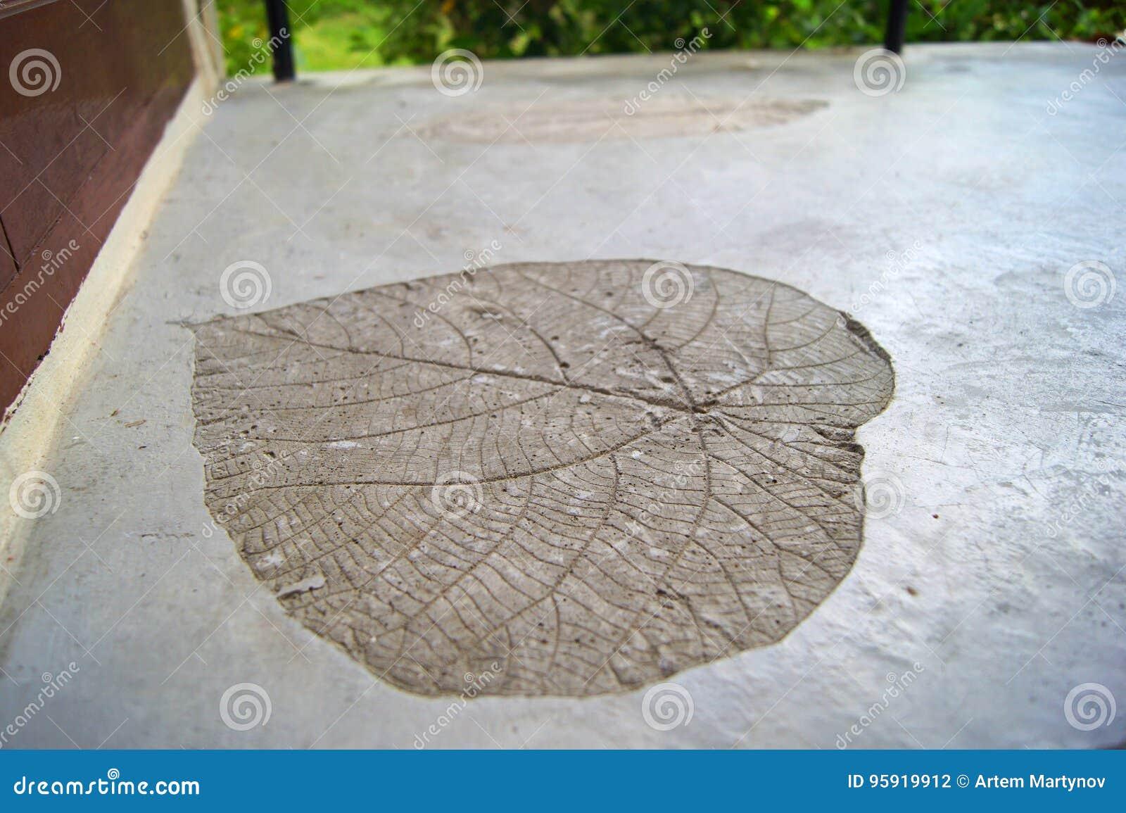 A impressão fossilizada do coração gigante deu forma à folha no assoalho concreto no balcão do hotel, ilha da planta da phi da ph