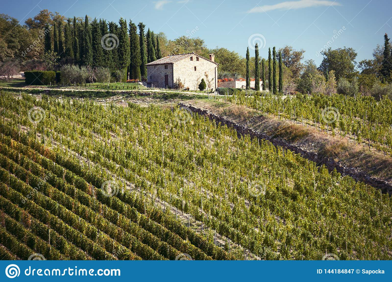 Spectacular view with italian autumn vineyard fields in tuscany