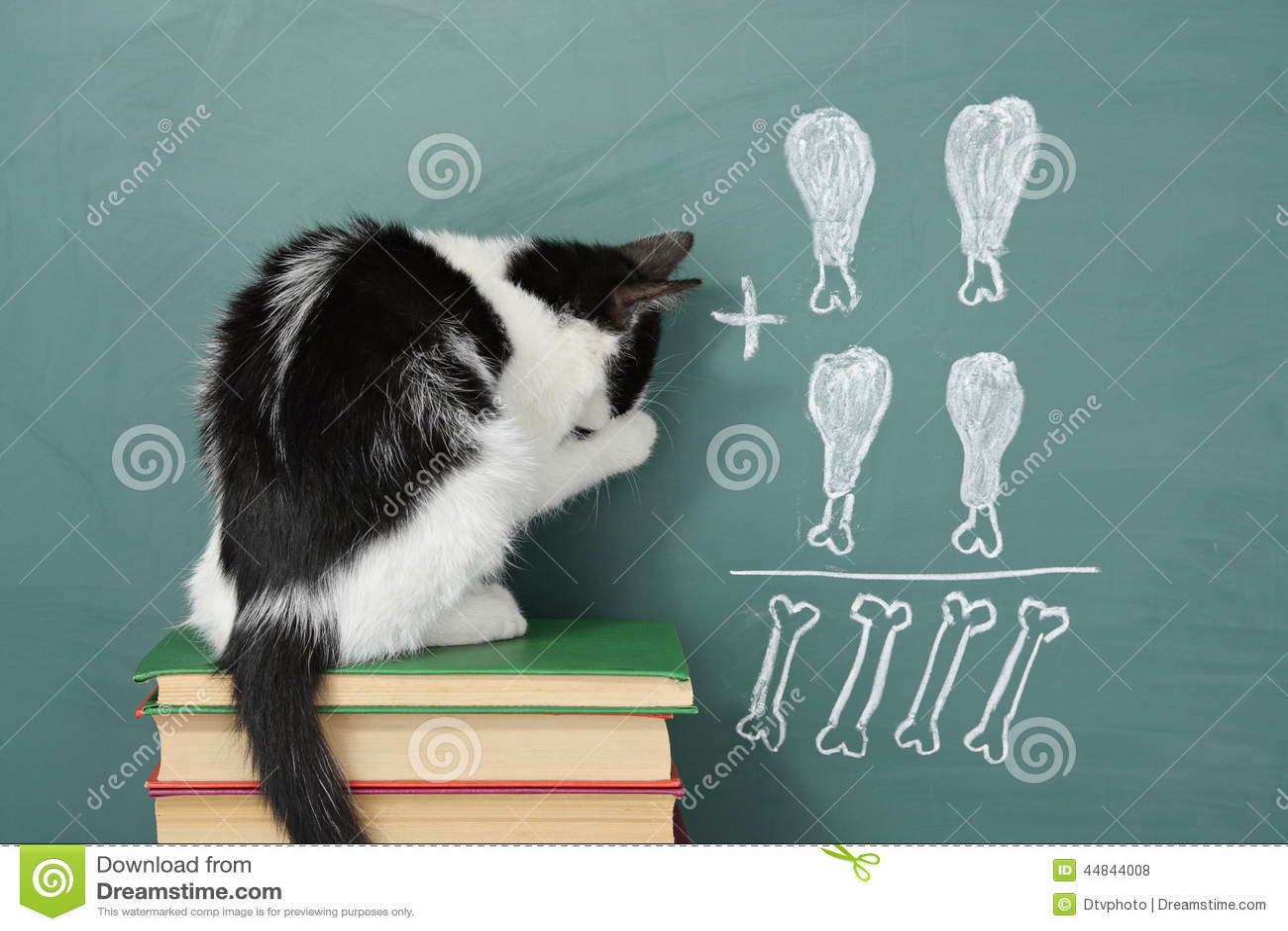 educated cat - photo #3
