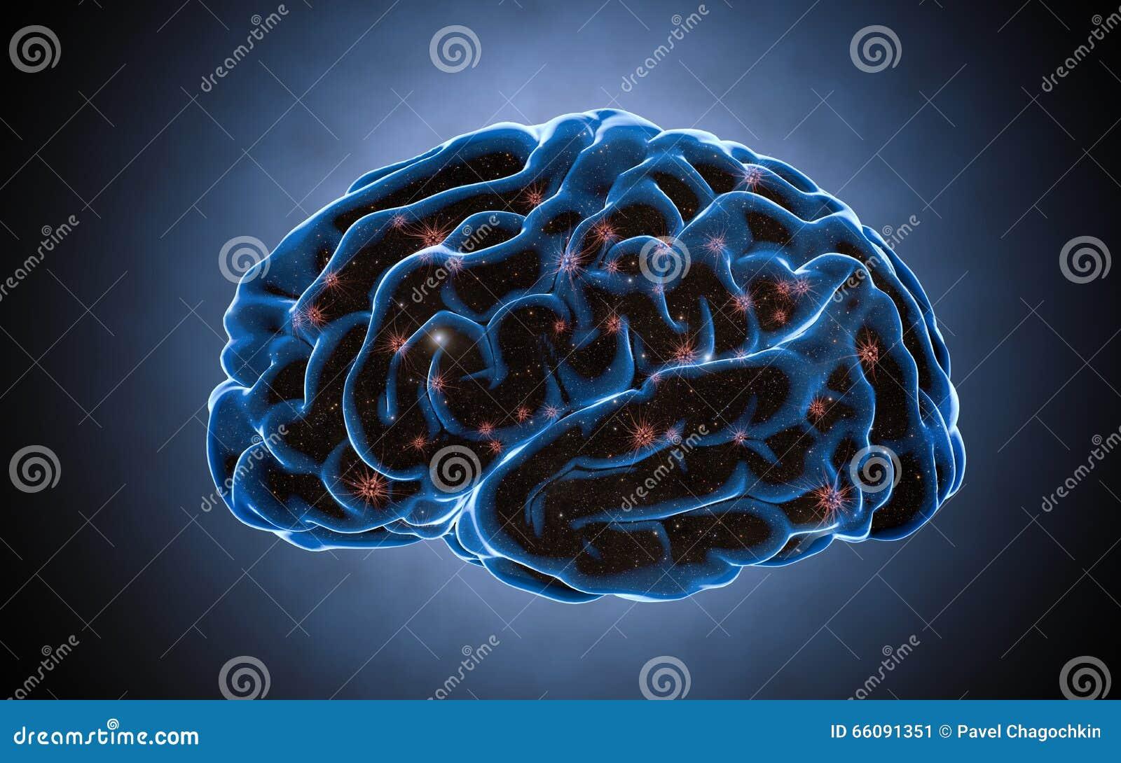 Impulsi del cervello Sistema del neurone Anatomia umana impulsi di trasferimento e generare informazioni