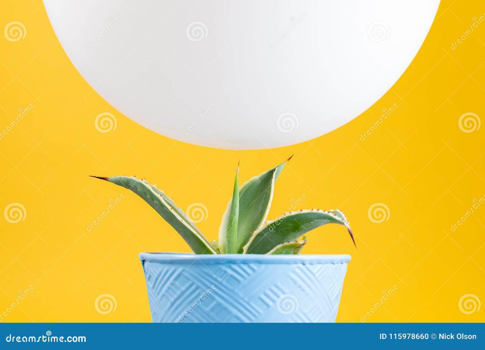 Impulso blanco que asoma sobre el cactus verde