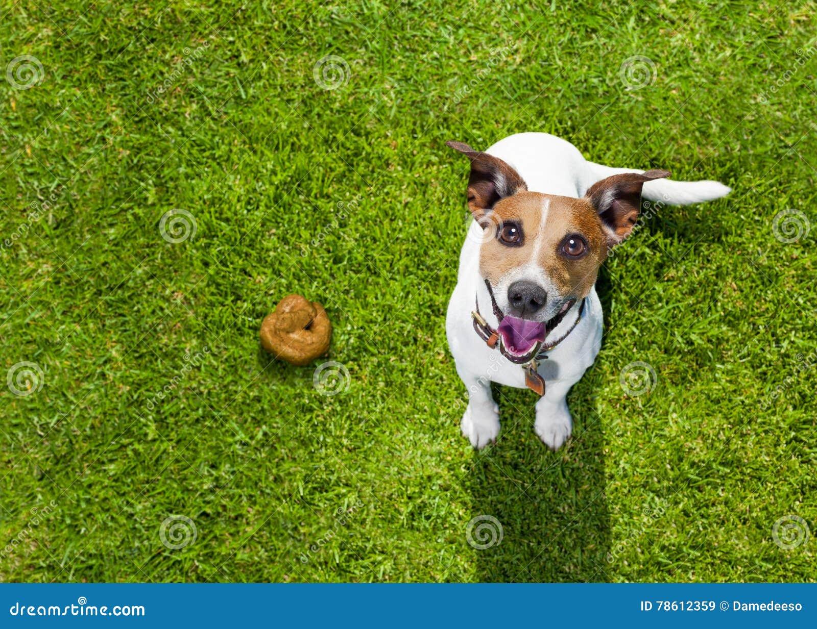 Impulso del perro en hierba en parque