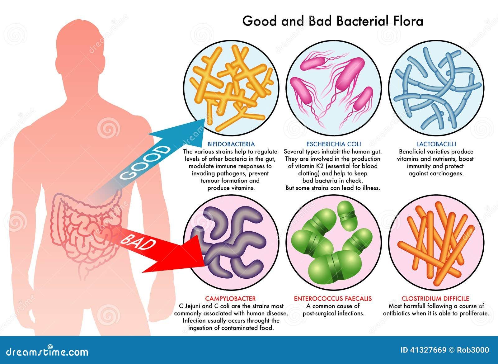 Inälvs- bakterie- flora