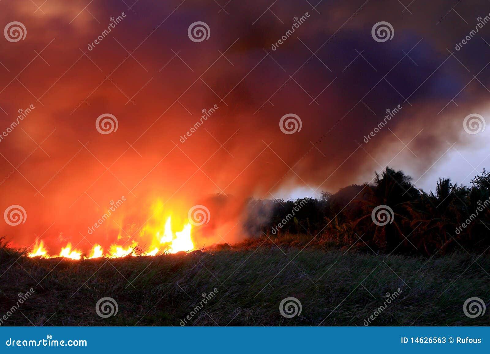 Incêndio que queima o bushland direto selvagem