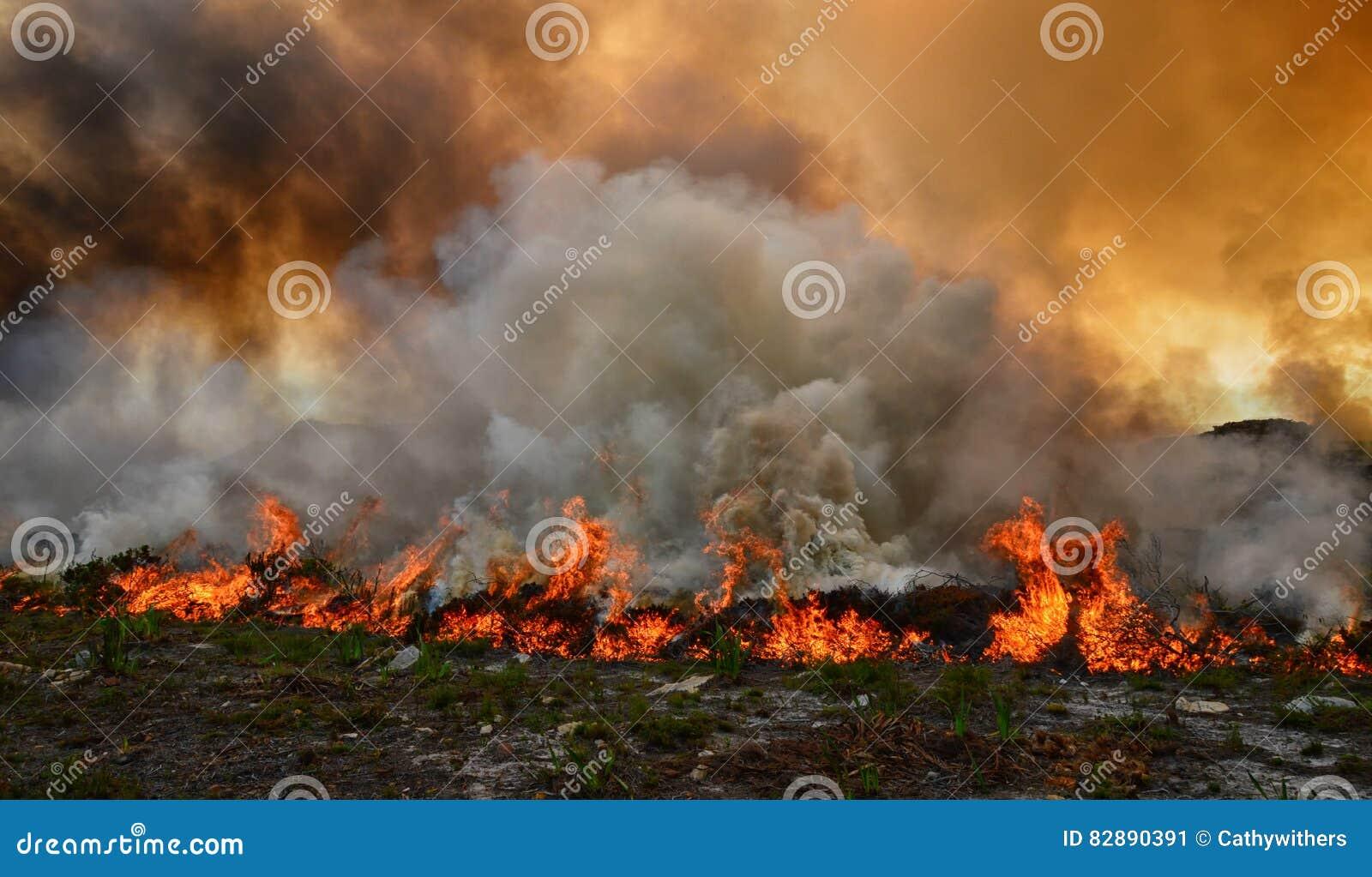 Incêndio violento de Fynbos