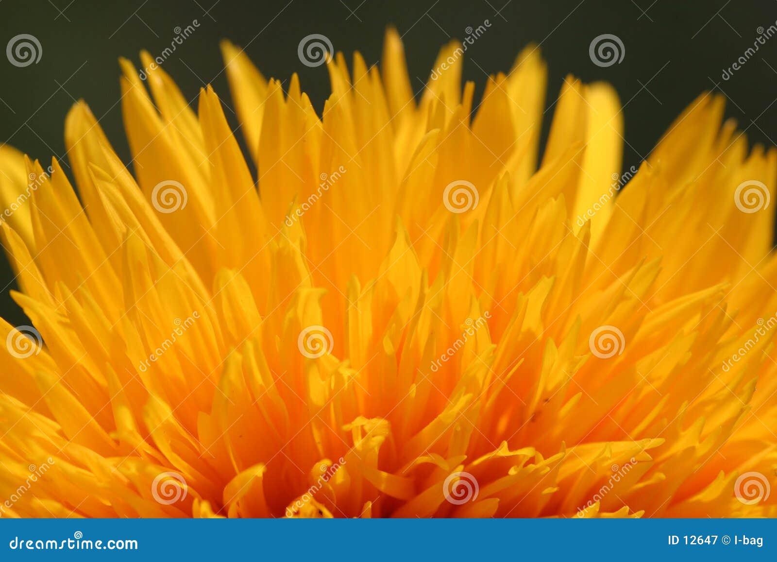 Incendie de fleur