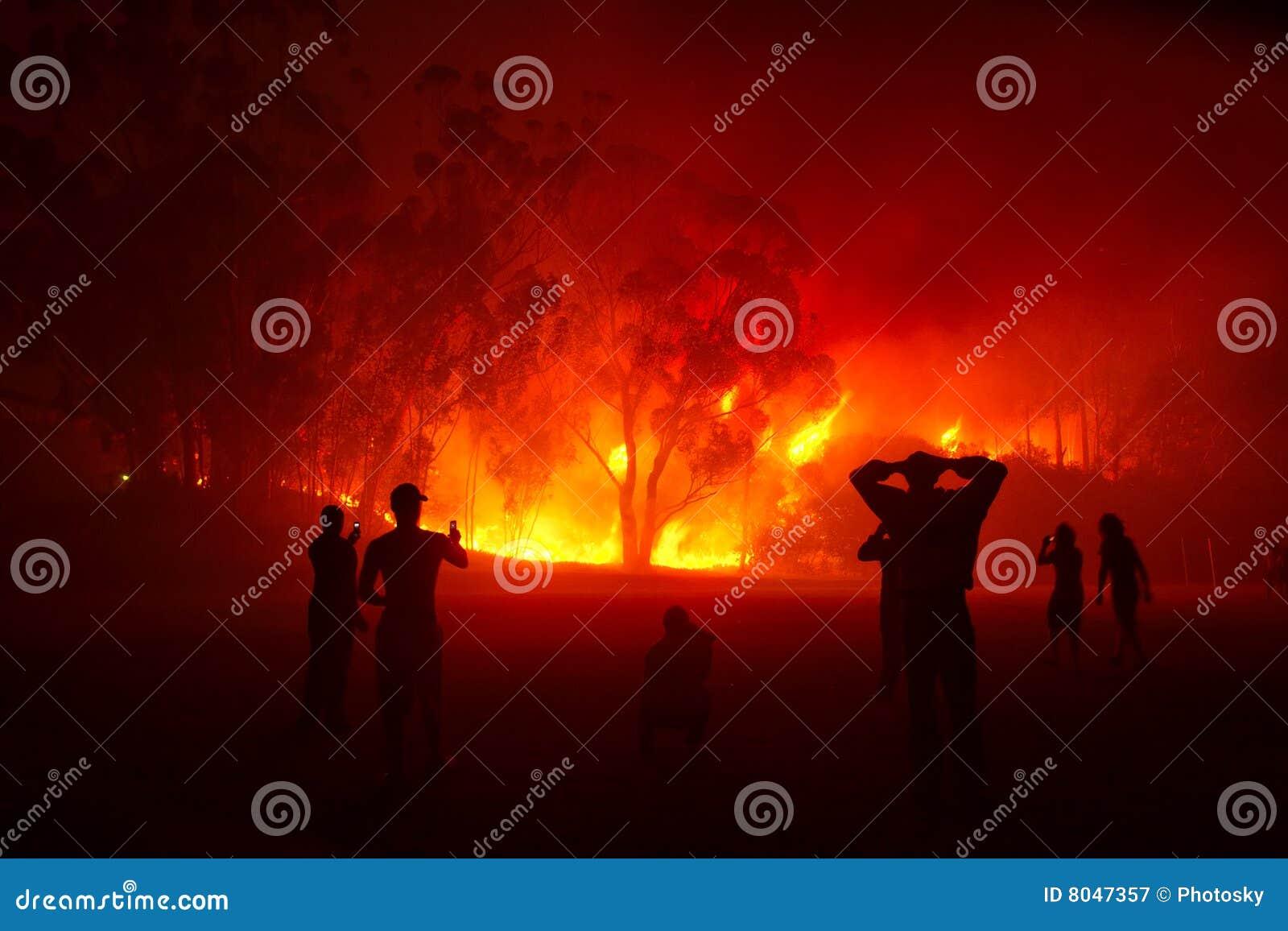 Incendio forestal de observación de la gente en noche