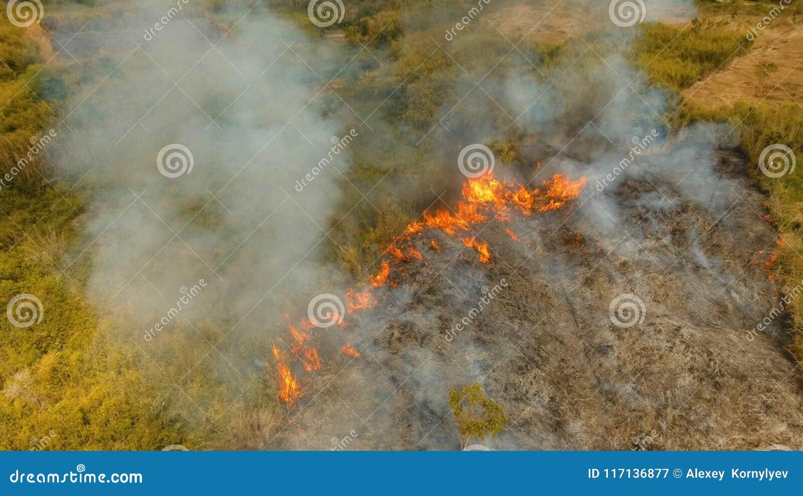 Incendio forestale di vista aerea Busuanga, Palawan, Filippine