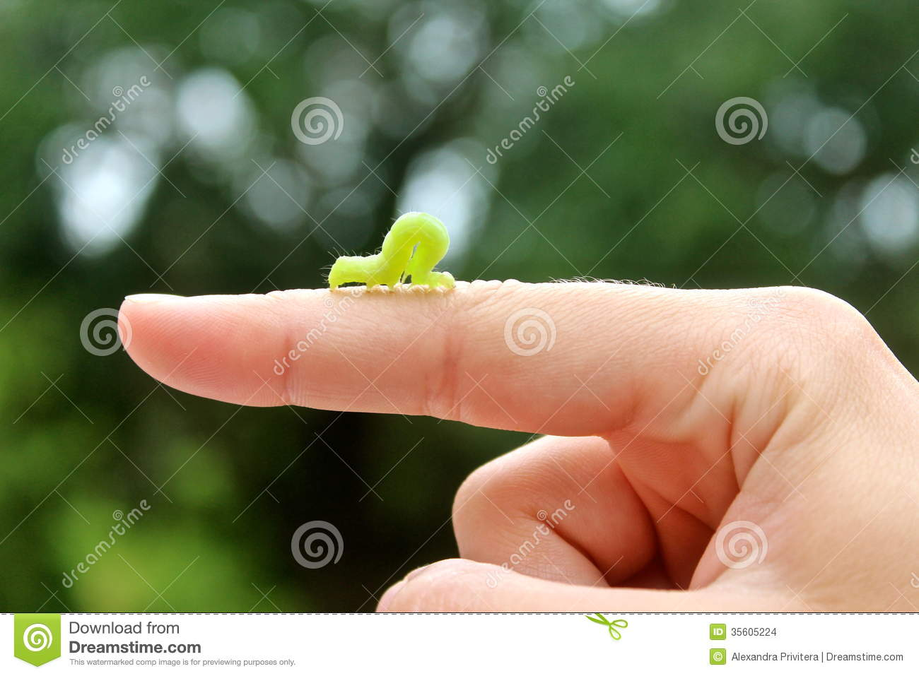 Displaying 20> Images For - Inchworm Clipart...