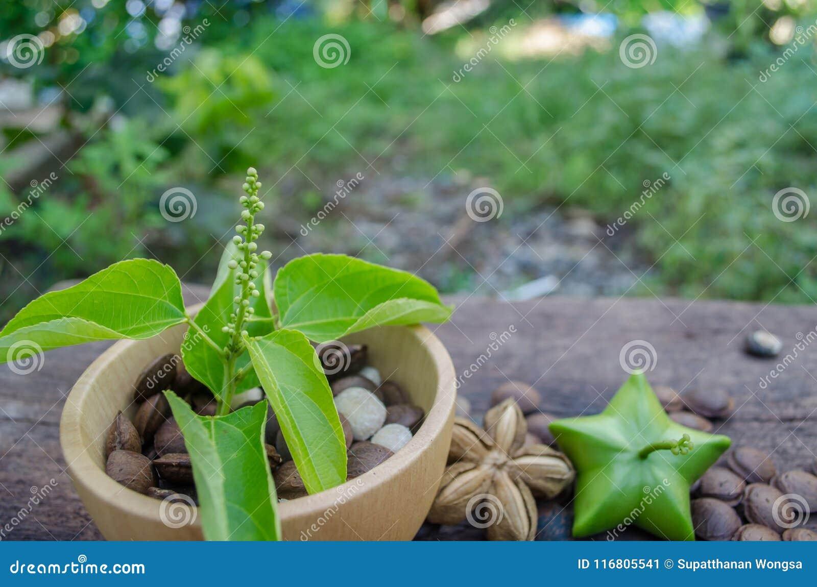 Inchi di Sacha, in una tazza di legno