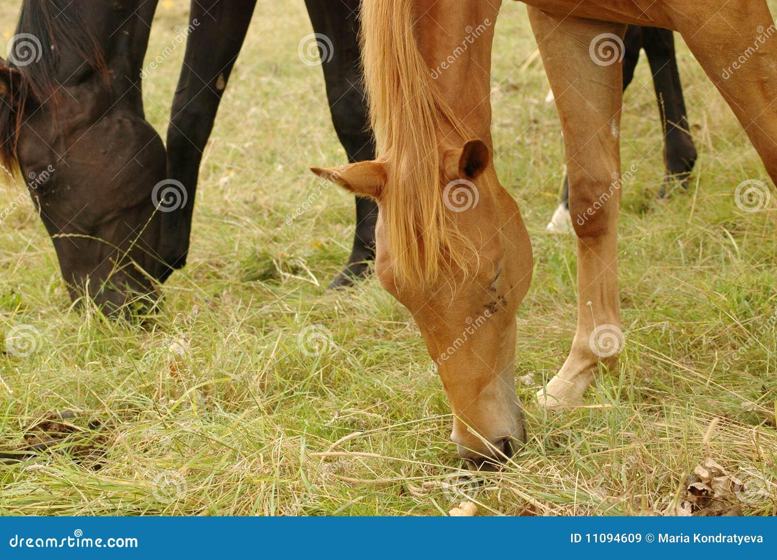 incomodidad del caballo fotos fotos
