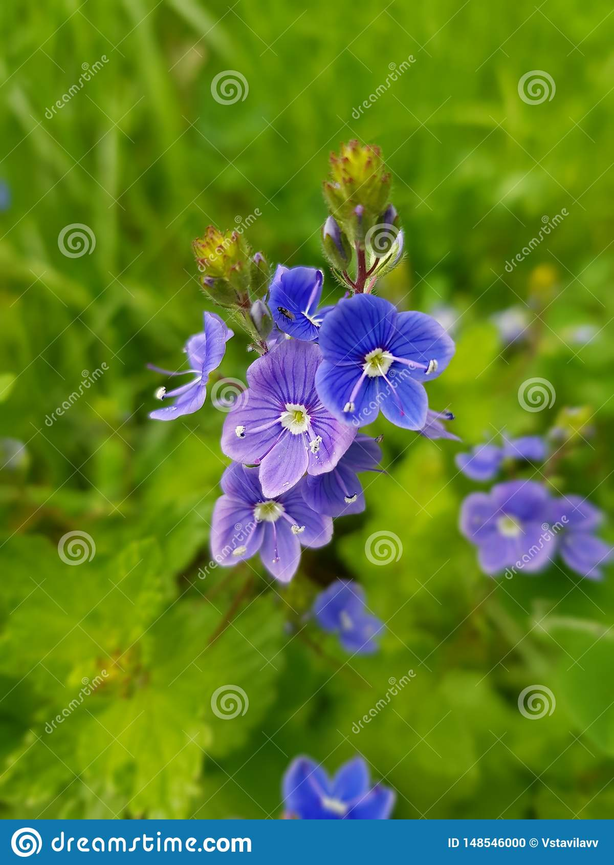 Incredibly cute, small blue with white, violet flowers.