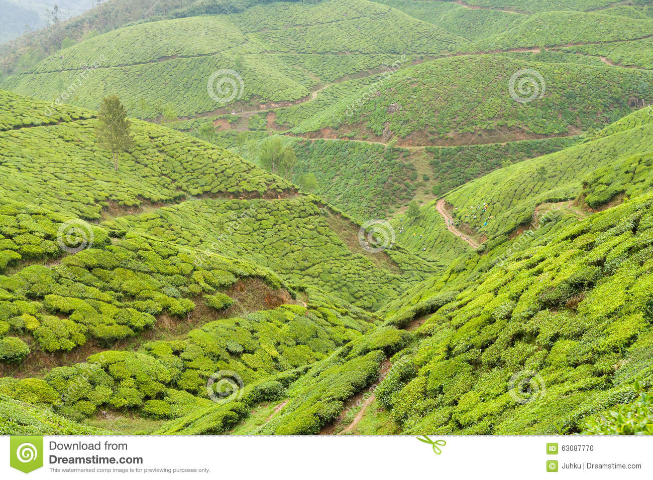 Download Inde Munnar De Plantations De Thé Photo stock - Image du organique, montagne: 63087770