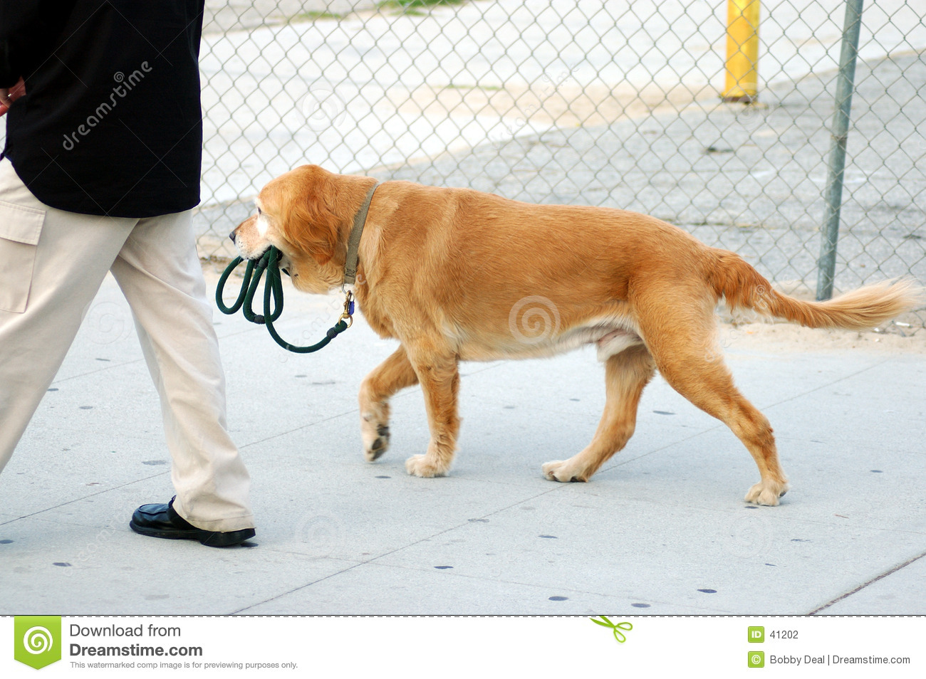 dog out walking his human. You will notice who has the leash!