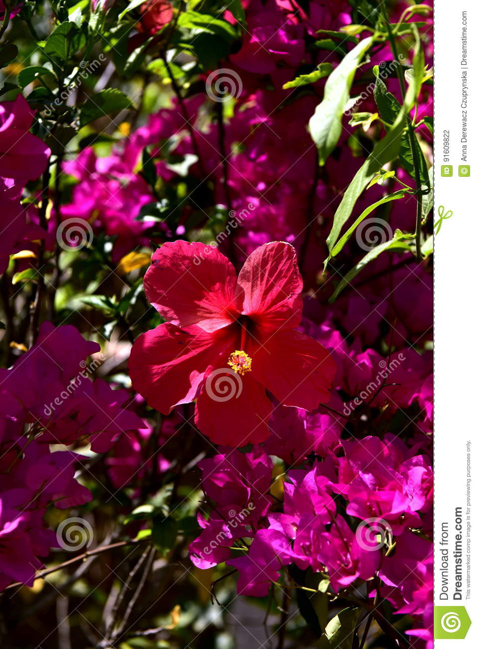 India Flowers In The Garden Stock Photo Image Of Just Poverty