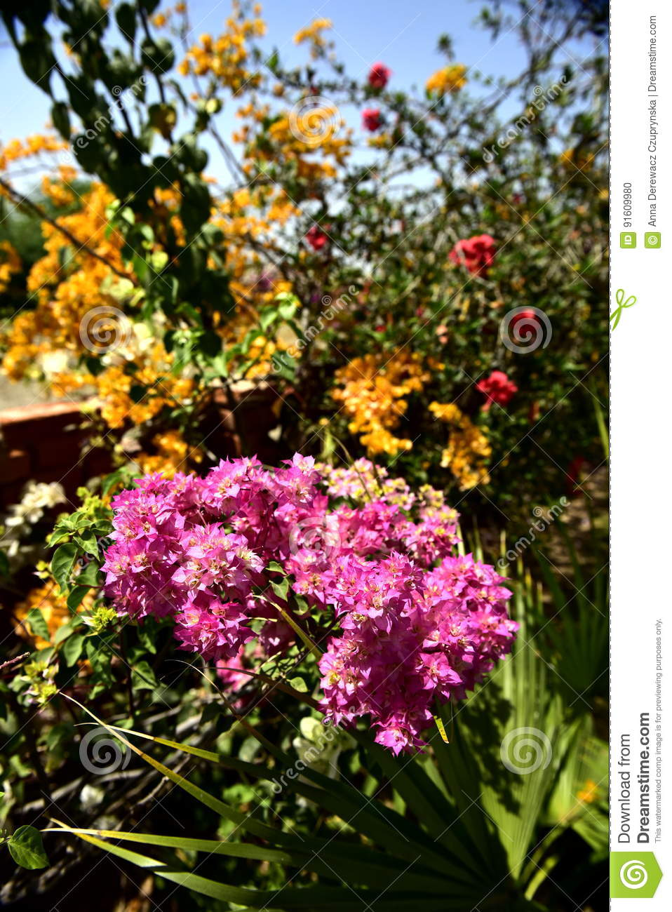 India Flowers In The Garden Stock Photo Image Of Also Kinds 91609980