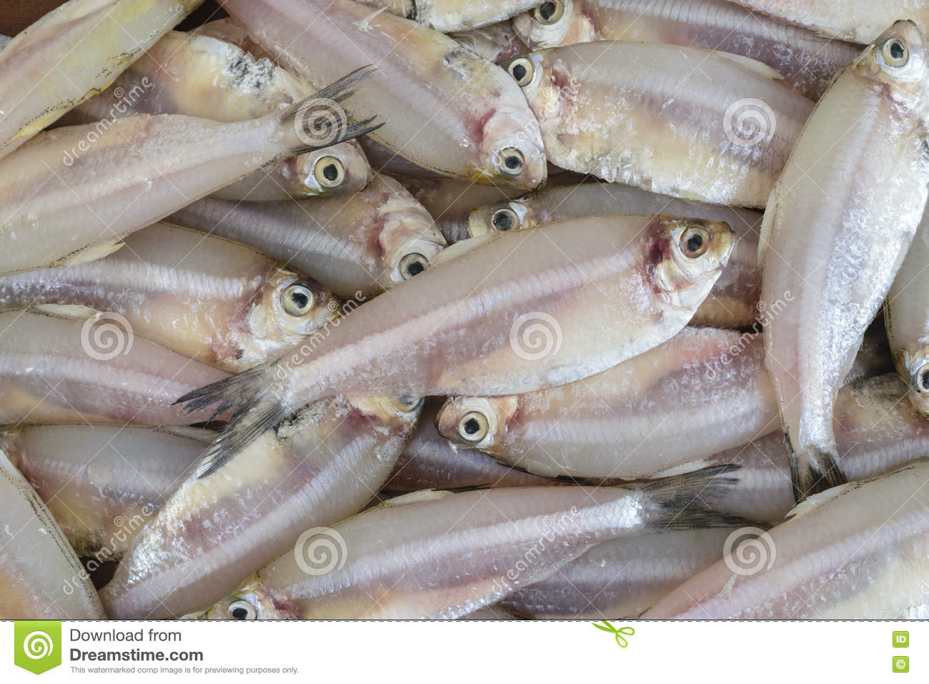 Indian Anchovy Or Kozhuva / Netholi Stock Photo - Image ...