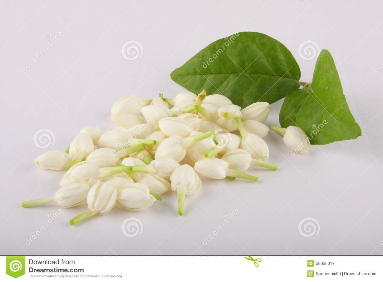 Indian aromatic jasmine flower stock image image of celebration indian aromatic jasmine flower izmirmasajfo
