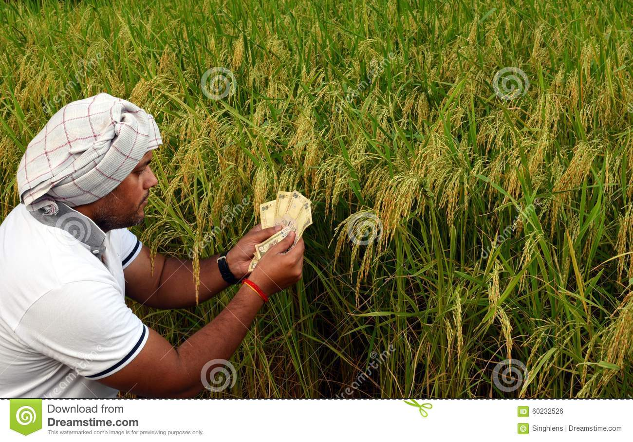 Asian rice farmer picture-5003
