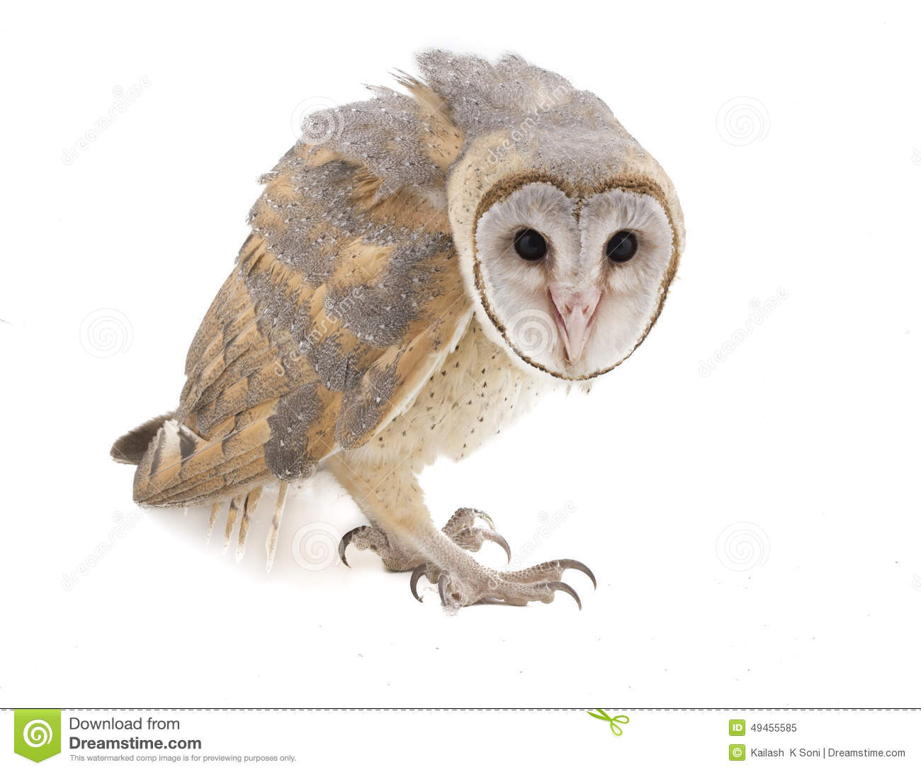 white owl hindu personals In orissa and bengal, lakshmi images include a white owl in local belief, white owls have come to be associated with auspiciousness and good luck because of their association with the goddess.