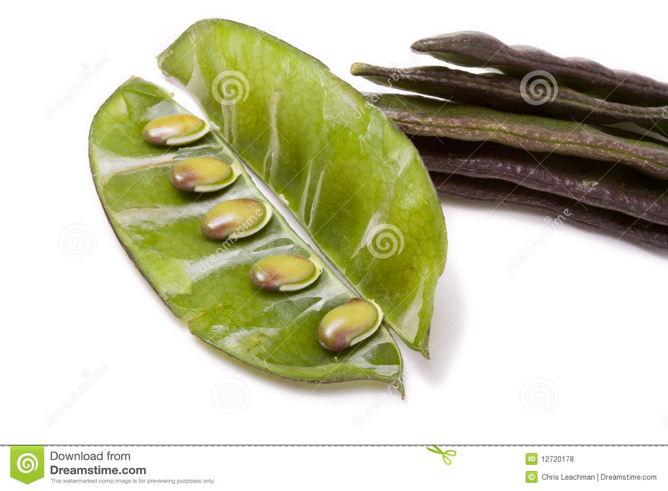 Egyptian Bean Plant http://www.dreamstime.com/royalty-free-stock-photos-indian-bean-image12720178
