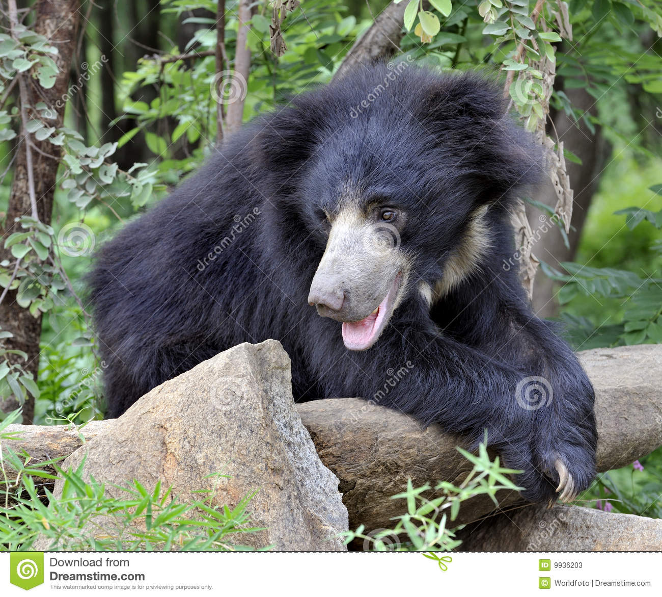 Malaysian People Clipart Indian Black Bear Stoc...