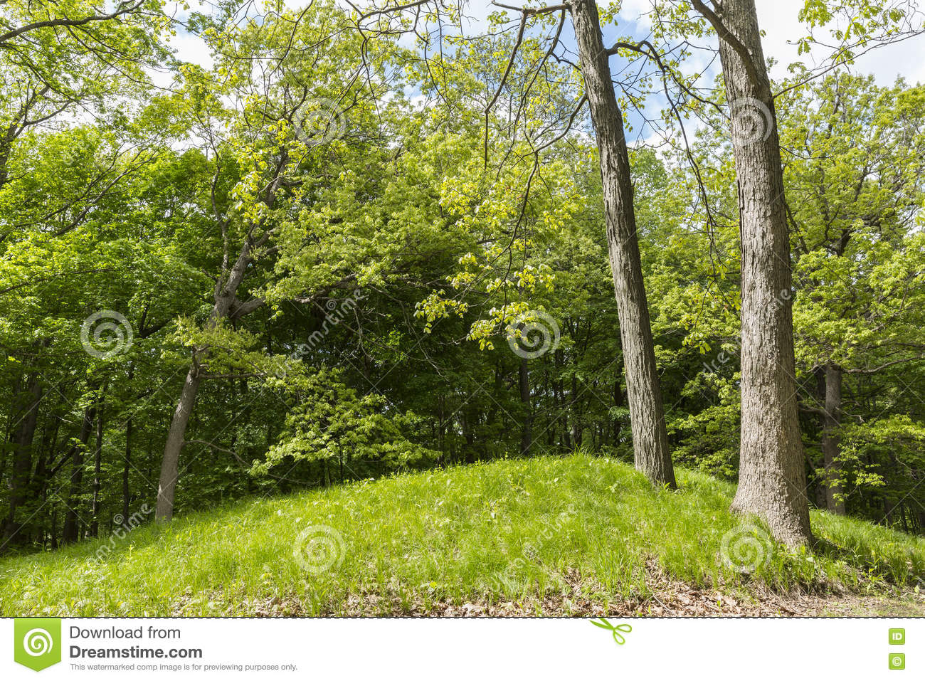Indian Burial Mound stock photo  Image of forest, native