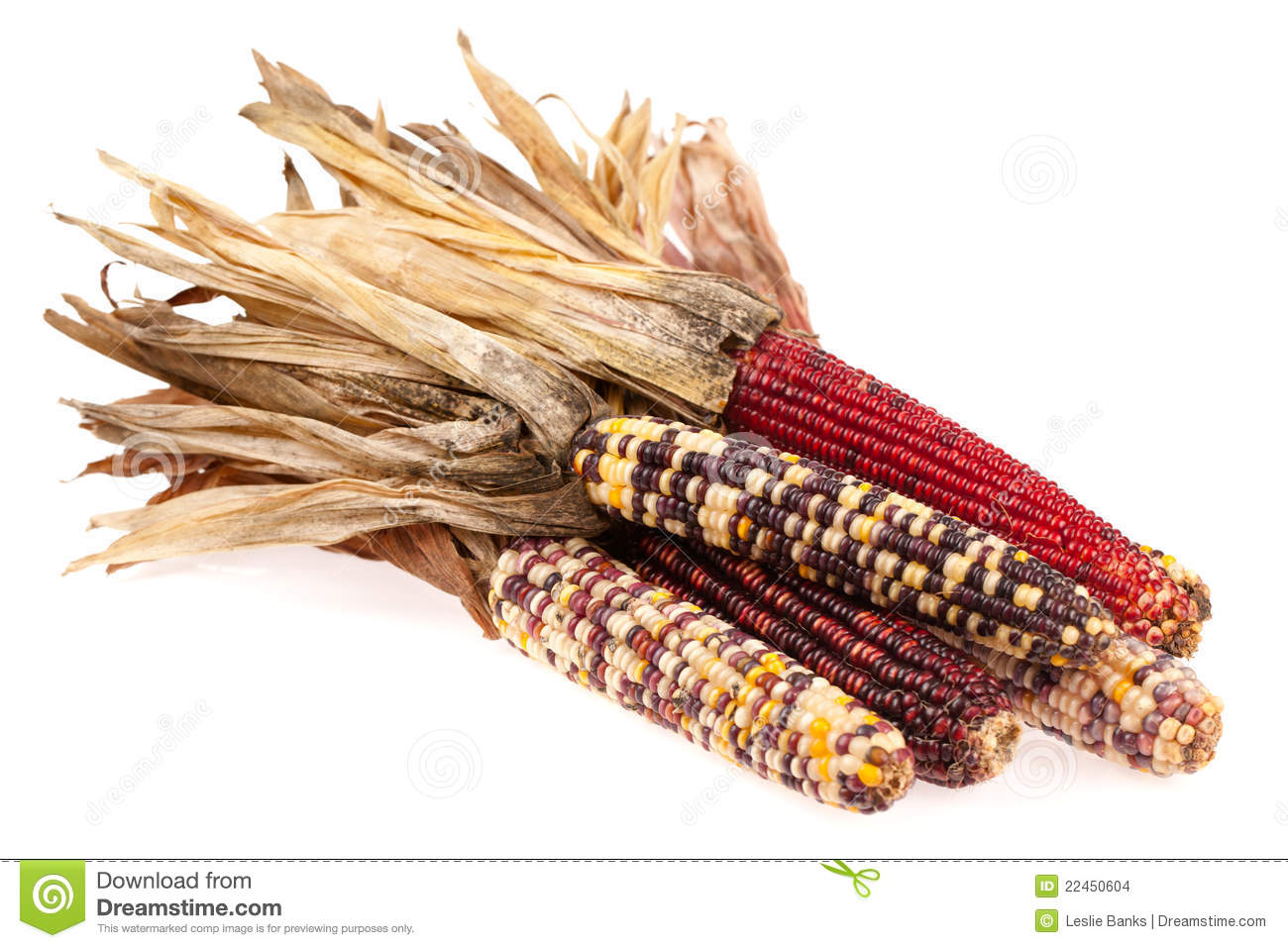 indian corn bunch stock images image 22450604 corn stalk clip art outside corn stalk clip art outside