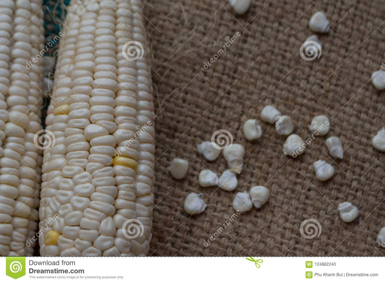 maize products owner
