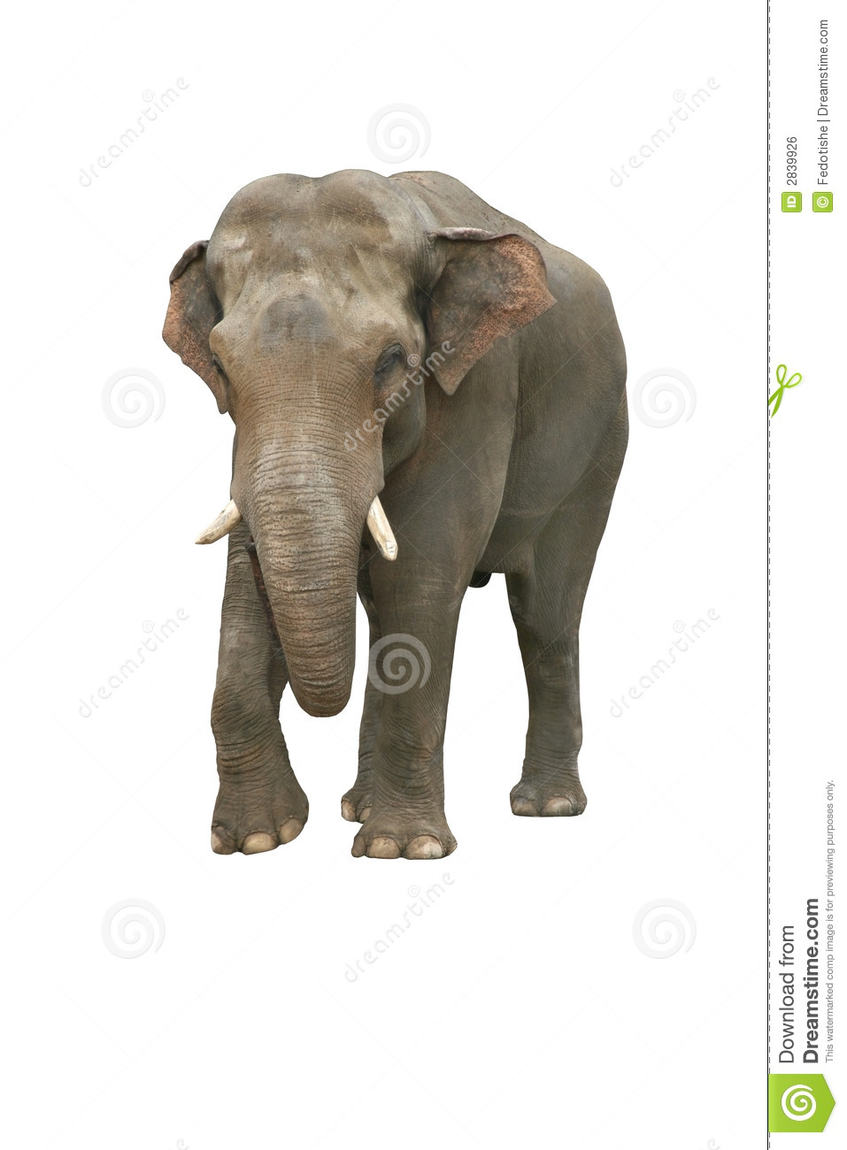 Indian Elephant Royalty Free Stock Image - Image: 2839926