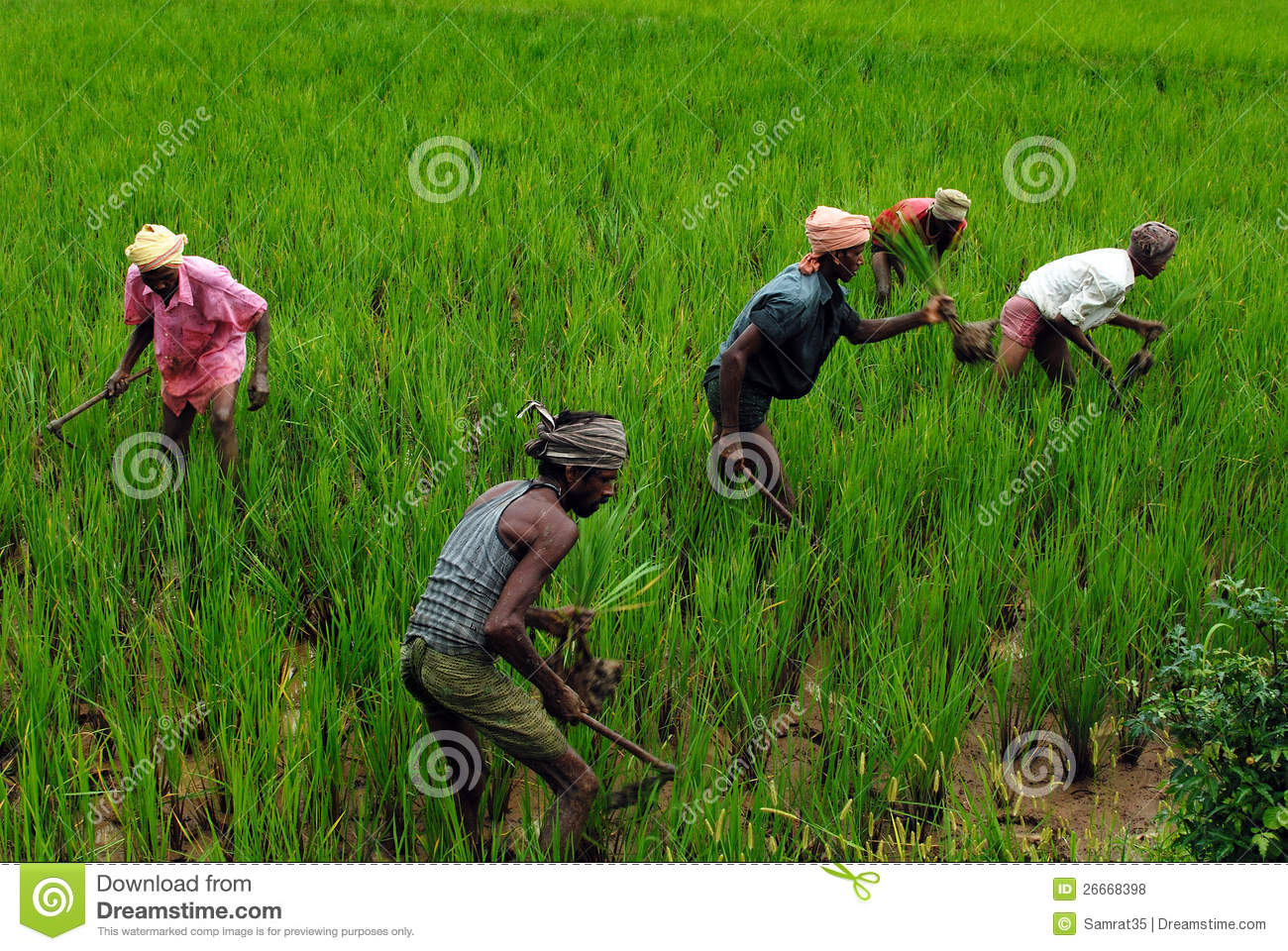 Indian Farmer Editorial Stock Photo - Image: 26668398