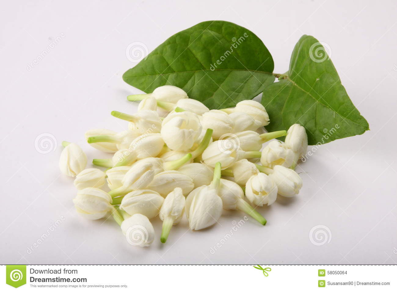 Indian jasmine flower with leafs stock photo image of culture download indian jasmine flower with leafs stock photo image of culture hinduism izmirmasajfo