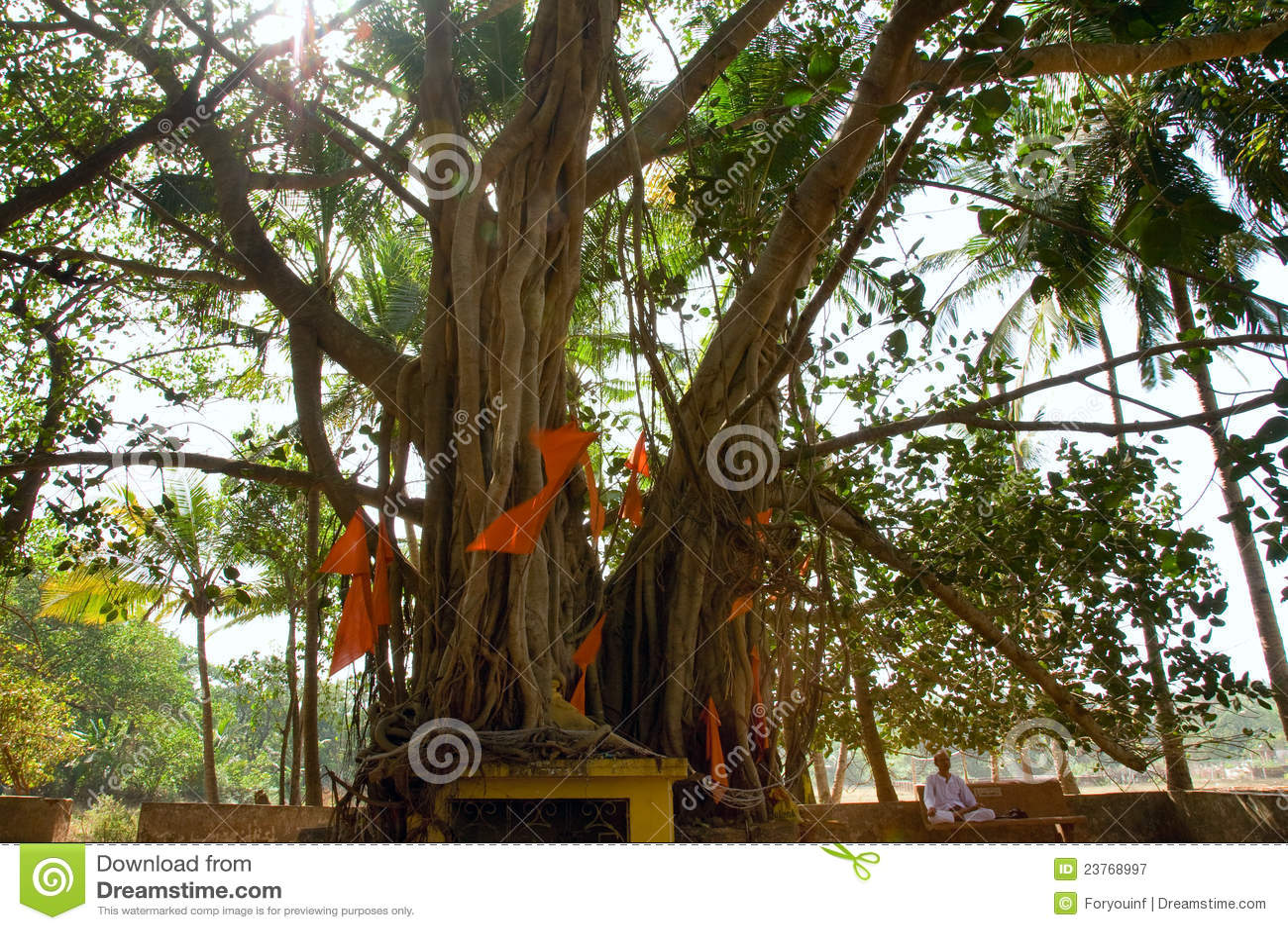 Indian man sitting near big banyan