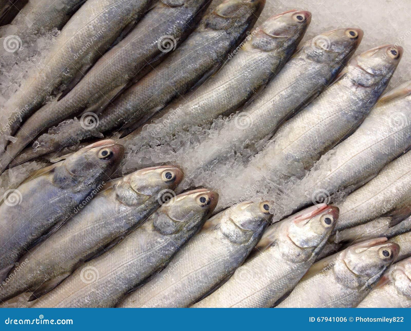 Indian salmon fish - photo#41