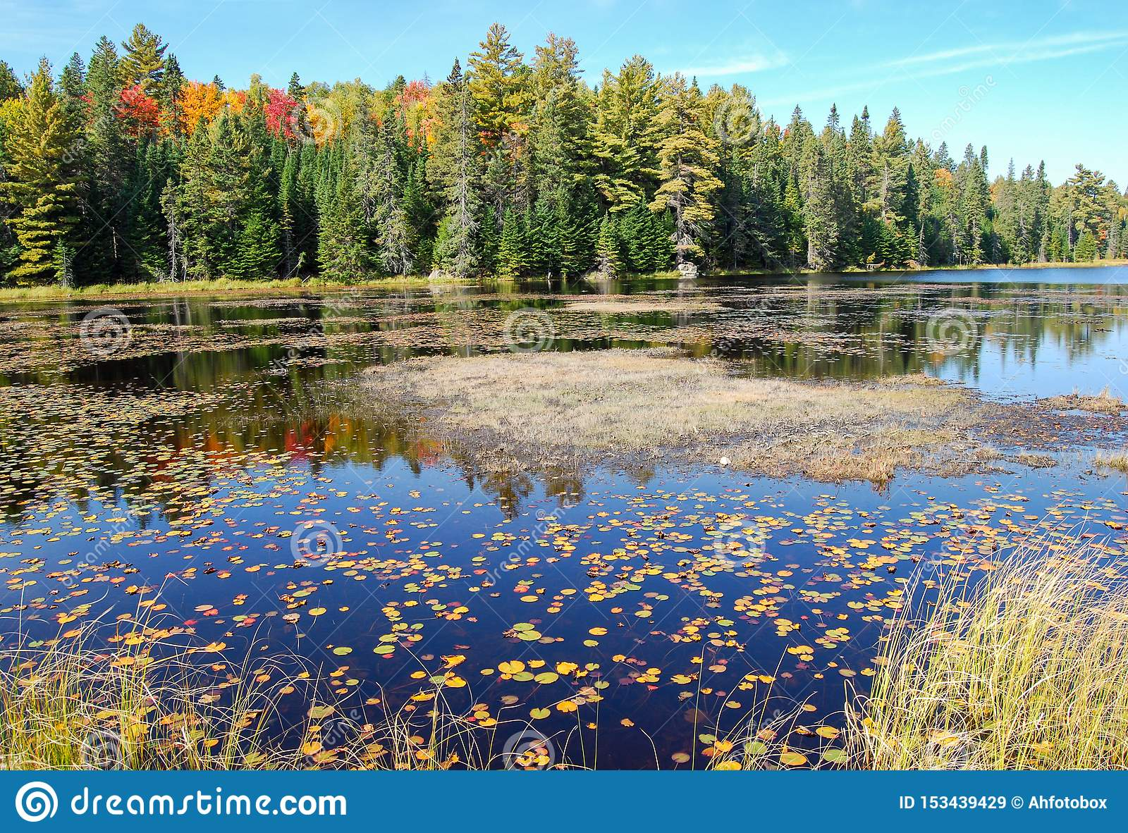 Indian summer at a lake in Algonquin Provincial Park near Toronto in autumn, Canada